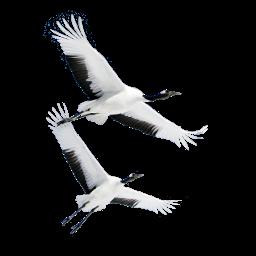 Fliegende Kraniche